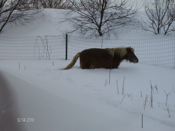 The snow almost takes my horse away!  Where is Sparky???
