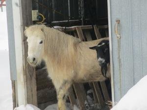 ebay and barn 064